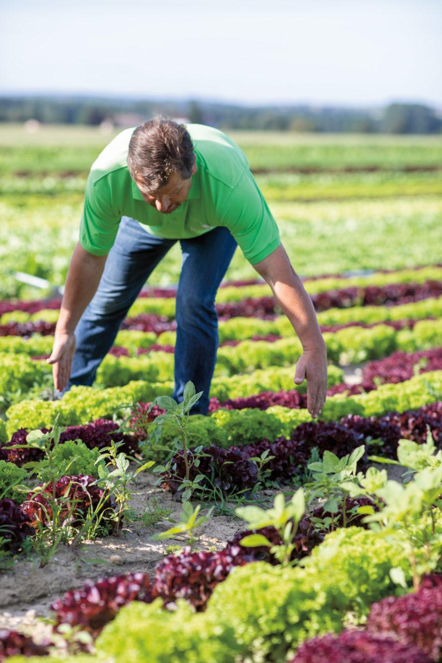 Gemüsebauer Derntl